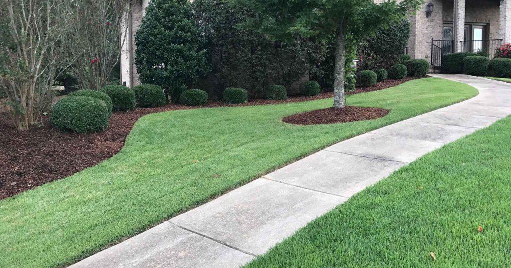 nice cut lawn