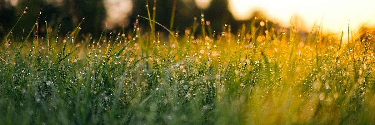 wake-up-your-grass-after-winter